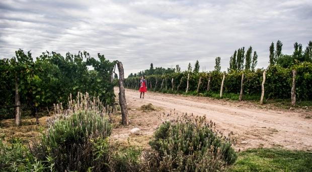 03-2016 Mendoza vineyard clouds